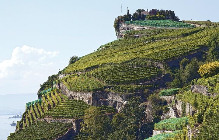 Vins Vaudois